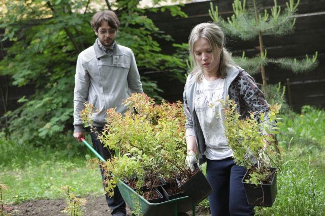 Ямальцы в ходе озеленения высадят 140 видов растений