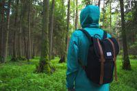 В лес нужно отправляться в яркой одежде.