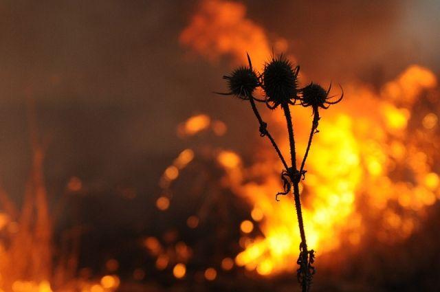 ГСЧС объявила об опасности пожаров в восьми областях