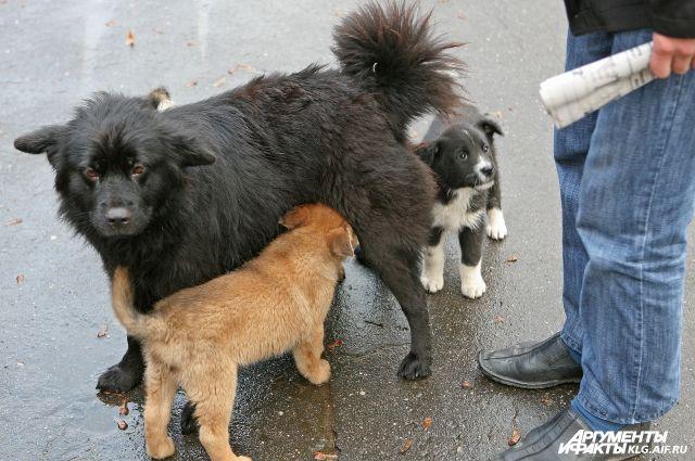 В Калининграде в конфликт между собачниками пришлось вмешиваться полиции.