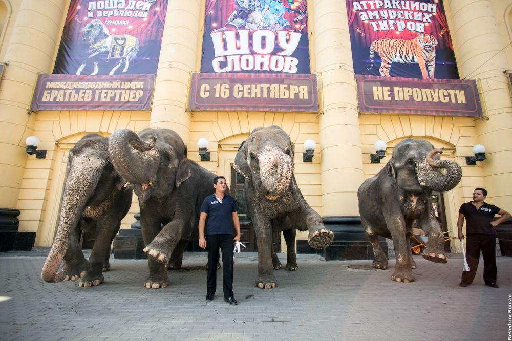 Прогулкой слонов цирковые работники поздравили ростовчан с 268-летием города.