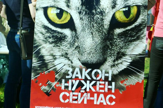 В Тюмени прошел митинг в защиту животных: фото