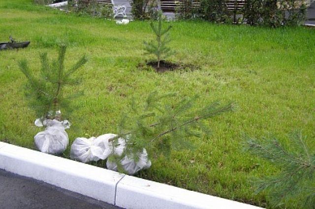 В Лабытнангах акцию «Живая Арктика» завершили посадкой сотен деревьев