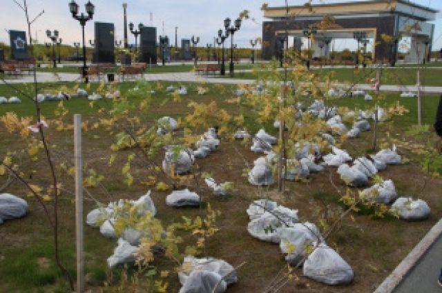 Салехардцы высадили в «Парке Победы» полторы сотни рябин