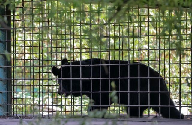ВПриморье наволю выпустили 2-х медвежат-сирот