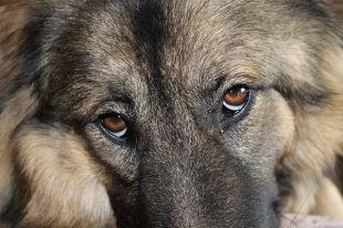 В Тюмени ищут живодеров, привязавших в лесу собаку проволокой к дереву