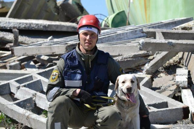 Собак-спасателей тренируют для поиска пострадавших под завалами.