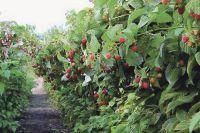 Дмитрий Бочков: Мелким хозяйствам без помощи и защиты государства не выжить