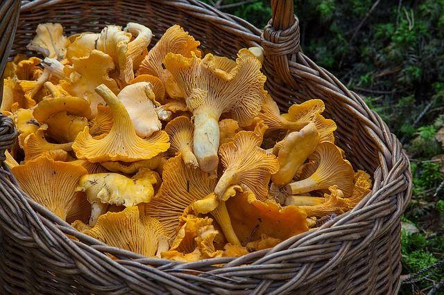 Из грибов можно приготовить много вкусных закусок.