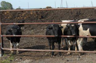 В Ижемском районе нарушали процедуру выбора и отвода земельного участка для строительства скотомогильника.