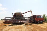 Аграрии стали заложниками большого урожая.