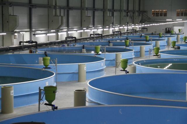 Завод повыращиванию радужной форели открыли вЮрге