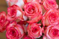 Сотрудники торговой точки сообщили, что неизвестный злоумышленник украл букет роз и скрылся.