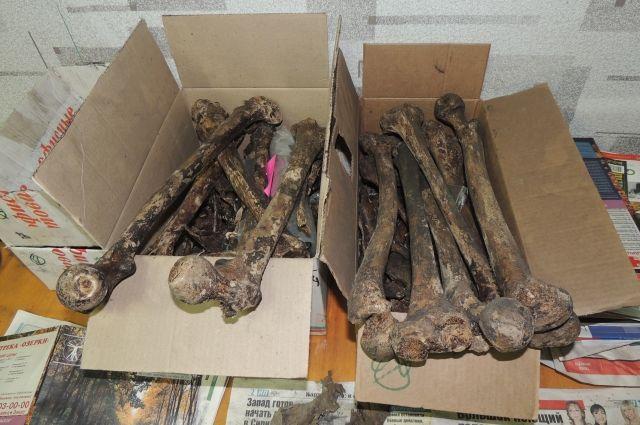 Сотни человеческих костей обнаружили около храма в северной столице