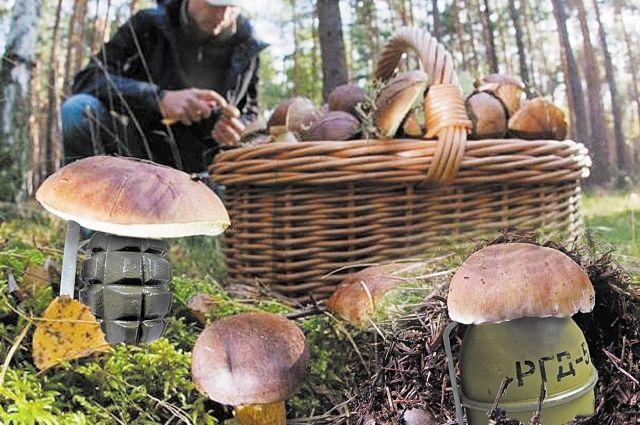 ВТамбовской области годовалые дети отравились грибами