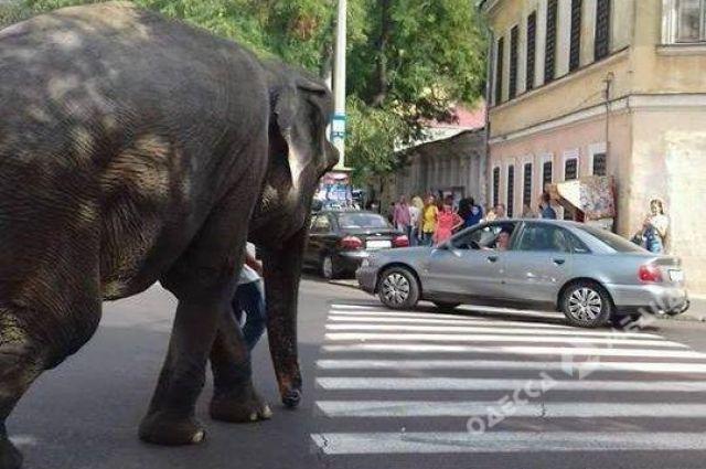 Вцентре Одессы увидели огромного слона