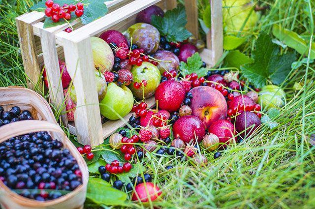 Выбор культур. Какие плодовые и ягодные подойдут вашему участку?