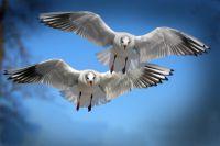 Влияют ли факелы СИБУР на миграцию птиц, выяснили в Тобольске