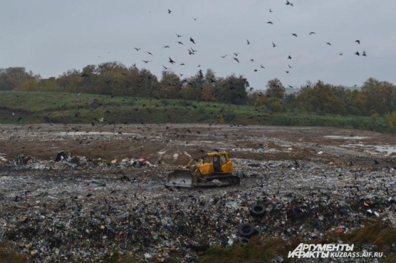 То, что не перерабатывается, укомплектовывается в брикеты и отвозится на полигон почти 50 га (в работе пока задействован один участок 18 га). На него в три ряда укладывают мусорные брикеты, сверху присыпая дроблёным мусором.