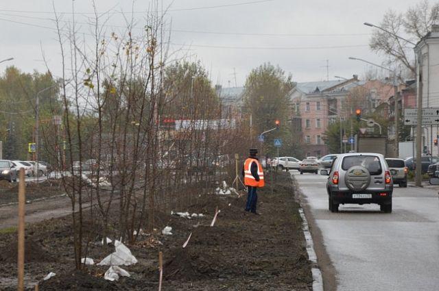 Неменее 1700 деревьев икустарников высадят до25октября вБарнауле