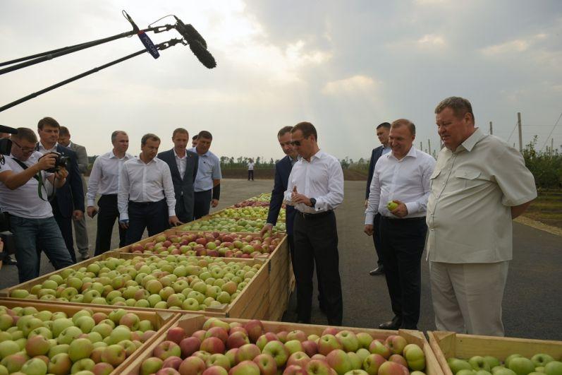 Дмитрий Медведев ознакомился с результатами развития интенсивного садоводства.