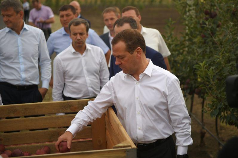 Премьер РФ поинтересовался урожаем яблок, сбор которых в самом разгаре.
