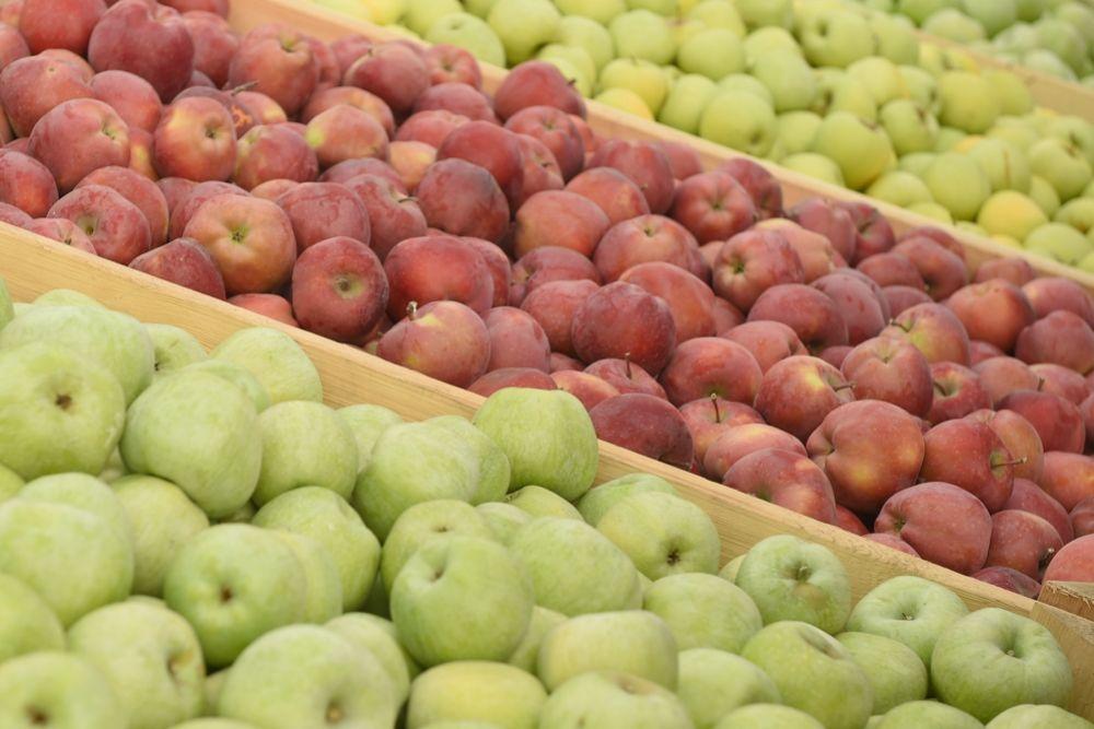 В 2016 году валовой сбор яблок в Адыгее составил 15 тысяч тонн.