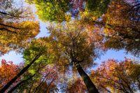 Неравнодушных тюменцев ждут на акции «Чистый лес»