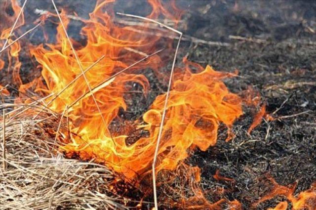 Белгородский облсуд взыскал споджигателя травы 300 тыс. руб.
