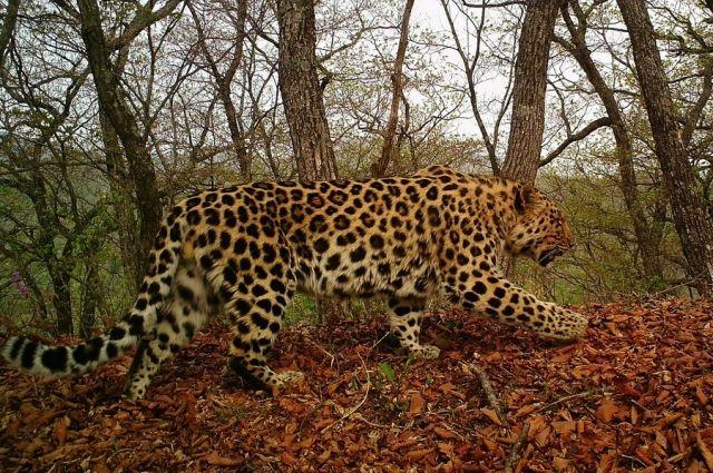 Друзья и сотрудники «Земли леопарда» отметили масштабное новоселье