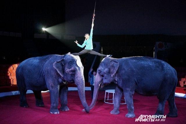 Слонихи Дженни и Магда больше 40 лет выступают в цирке.