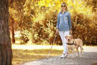 Собака-поводырь, снаряжение, средства на её содержание и ветобслуживание - всё оплачивает государство.