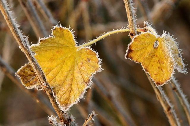 Cотрудники экстренных служб прогнозируют заморозки вВоронежской области
