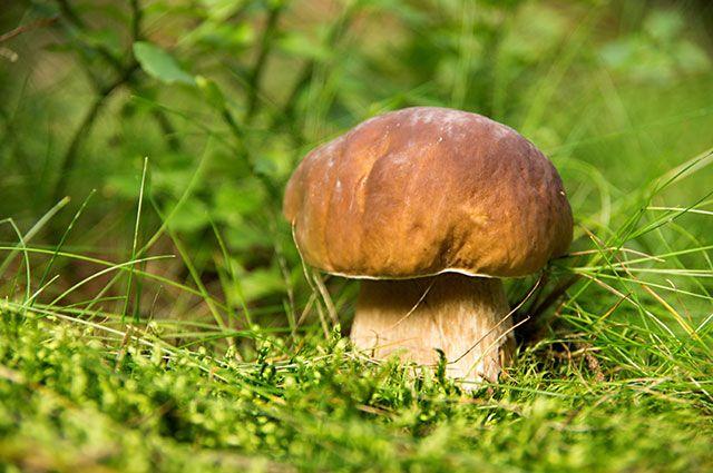 Советы, где и как искать грибы. Где искать грибы в Подмосковье