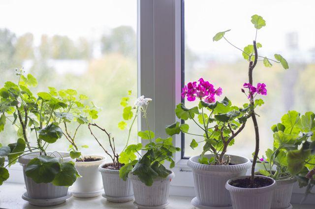 Лечение алкоголизма цветок на окне уровень алкоголизма в чурапчинском улусе