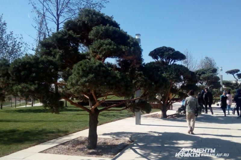 Некоторые деревья острижены под бонсаи.