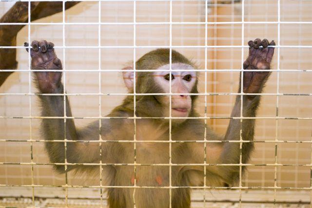 Обезьяна напала на сотрудника зоопарка