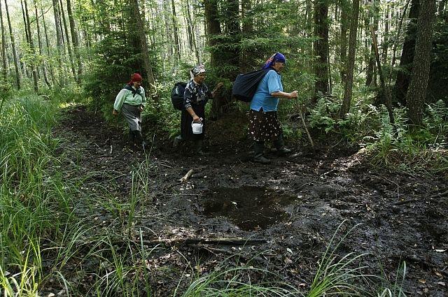Руководство одобрило создание российско-белорусской особо охраняемой природной территории «Заповедное Поозерье»