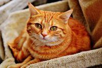 Тюменским кошкам нужен дом: зоозащитники просят у города участок