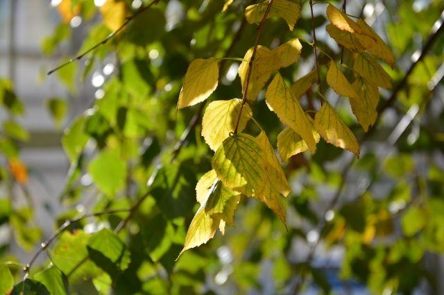 До пятницы, 6 октября, температура воздуха днём будет держаться на уровне  +2+7 градусов. В выходные начнётся потепление.