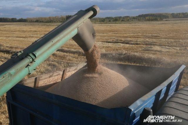 Фермеры не рады большому урожаю зерна.