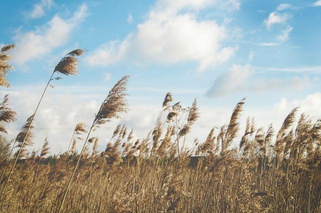 Ветер усилится в Приангарье 4 октября.