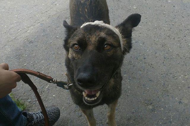 Садист, изувечивший собаку впоселке Винзили, пойдет под суд