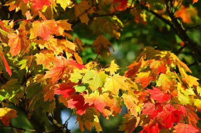 Тепло будет в Иркутске 4 октября.