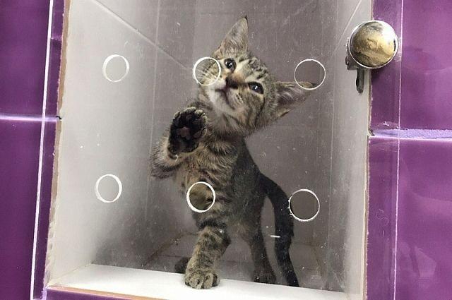 Кошка Серенькая ждет новых хозяев.