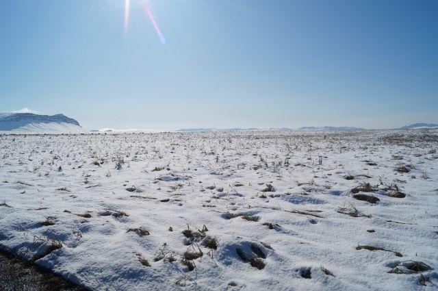 Под снегом лежит неубранный урожай.