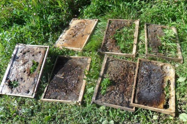 Два жителя Таштагольского района обвиняются в краже пчелосемьи.