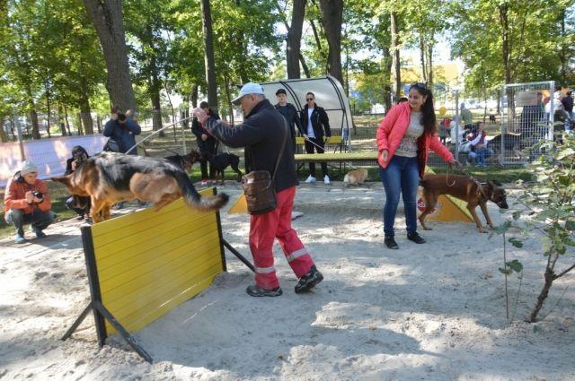 Впарке Островского вРостове возникла площадка для выгула собак