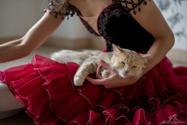 В съёмках принимали участие всего четыре котика из 60 подопечных приюта «Матроскин».