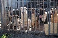 Большинство бродячих собак в прошлом чьи-то питомцы, которые оказались не нужны человеку.